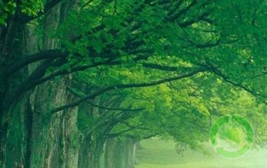 Környezetvédelmi fejlesztéseink